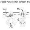 Anti-Cancer Drug Transport