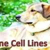 Canine Cell Lines for Melanoma, Hemangiosarcoma and Osteosarcoma Research