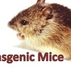 Iron Deficiency Mouse Model