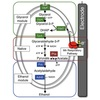 Biotranformation with Redox Balance Process