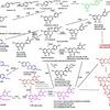 Microbial Biosynthesis of Flavonoids