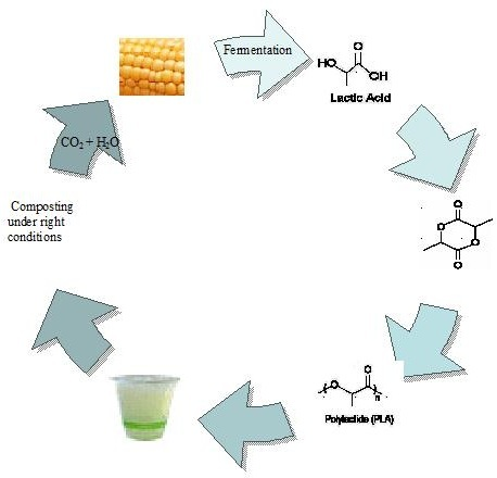 Biodegradable Polylactide Polymer from Polymerized Oil - z08017 ...