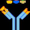 Antibody Antigen Bond