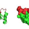 Protein Scaffold