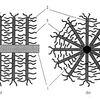 A representative sketch of a longitudinal cross-sectional view of a 3D carbon fiber