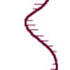 ssDNA
