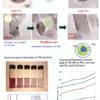 Tunable Localized Surface Plasmon-Enabled Broadband Light Harvesting Enhancement for Panchromatic Dye-Sensitized Solar Cells 1