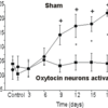 Activating oxytocin-releasing neurons prevents increase in blood pressure during chronic intermittent low oxygen in rats.