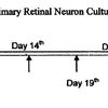 Timeline of exposure of a primary retinal neuron culture to treatment with cerium oxide nanoparticles