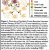 Synthetic tumor recruited immuno-cellular therapy (STRICT) for the treatment of primary and metastatic cancers