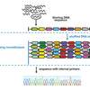 DNA camouflage for the protection of sequence identity from unauthorized individuals