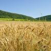 Global Food Supply