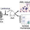 Humouse: A humanized mouse model of AML with an autologous human immune system