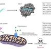 Novel peptides for the treatment of chemotherapy-resistant cancers