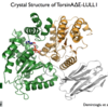 Crystal structure of the mutant TorsinA-LLUL1 complex.