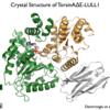 Crystal structure of the mutant TorsinA-LLUL1 complex.