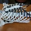 Skeletal Model