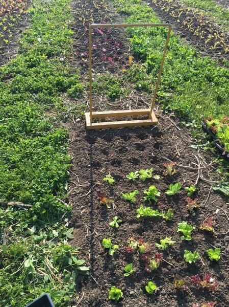 Image Gallery: Bio Intensive Gardening ...
