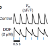 Drug-induced instabilities detected by this system. Dofetilide (2 mM) leads to voltage alternans at relatively low pacing frequency (2 Hz).