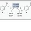 Enzyme Cascade