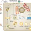Lysosomal Storage Disease