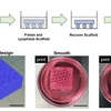 Diagram (a) illustrates the new UCF 3D-printing technique used to produce 3D-printed porous scaffolds for cell culture. Image (b) shows the honeycomb design of scaffolds and the actual appearance of scaffolds with different processing routes after recovery from a gelatin bath. Recovered prints were immersed in cell culture media to reveal pore formation with the existence of bubbles inside the struts. Scale bars are 10mm.