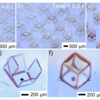 (a-c) Real-time self-assembly process of cubic structures on a glass/20 nm thick Cr substrate. (d-f) Zoomed-in optical images of micro-structures shown in (a-b); (d) 2D, (e) half-way folded (e), and (f) fully folded; (g) Optical image of substrate-free folded cubic structure