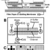Laminated chip diagram for Western blot