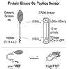 Protein kinase peptide sensor