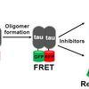 Molecular basis of platform for screening tau oligomerization via FRET biosensors.